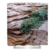 Growing From The Rock Terrain In Zion  Shower Curtain