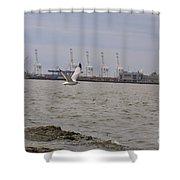 Gull In Flight On New Jersey Bay Shower Curtain