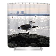 Gull Isle II Shower Curtain