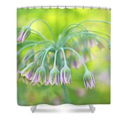 Sicilian Honey Lily Shower Curtain