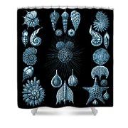 Haeckel Thalamphora Shower Curtain