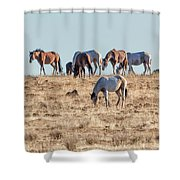 Hanging With Family And Friends - South Steens Wild Horses Shower Curtain by Belinda Greb