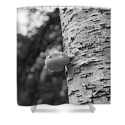 Heart On A Tree Shower Curtain