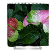 Hearts At Ease Shower Curtain