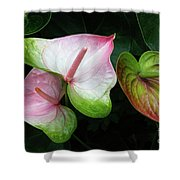 Hearts Together Shower Curtain