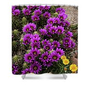 Hedgehog Cactus And Yellow Daisies Shower Curtain