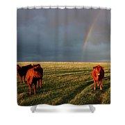 Heifers And Rainbow Shower Curtain by Rob Graham