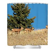 Herd Of Colorado Deer Shower Curtain