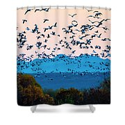 Herd Of Snow Geese In Flight, Soccoro Shower Curtain