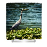 Heron In The Lily Pads Shower Curtain