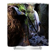 Hidden Falls Sombrio Beach 3 Shower Curtain