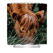 Highland Cow Eating Close Up Shower Curtain by Scott Lyons