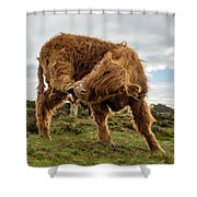 Highland Cow Having A Scratch Shower Curtain by Scott Lyons