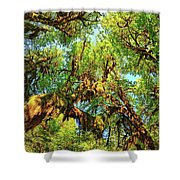 Hoh Rainforest Shower Curtain by Kyle Lee