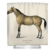 Horse  Equus Ferus Caballus  Illustrated By Charles Dessalines D' Orbigny  1806-1876  Shower Curtain