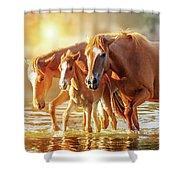 Horse Family Walking In Lake At Sunrise Shower Curtain