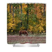 Horse In Fall Shower Curtain