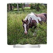 Horse Print 578 Shower Curtain