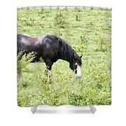 Horse Print 828 Shower Curtain
