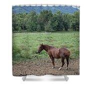 Horse Print 900 Shower Curtain