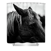 Horse Up-close Shower Curtain