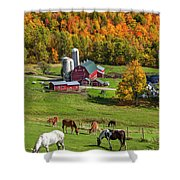 Horses Grazing In Autumn Shower Curtain