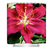 Hot Pink Day Lily Shower Curtain