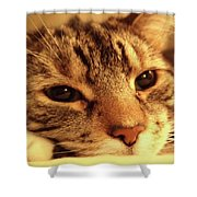 Huckle Shower Curtain