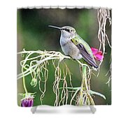 Hummingbird 105 Shower Curtain