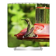Hummingbird 106 Shower Curtain