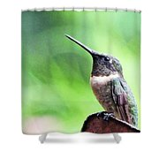 Hummingbird 90 Shower Curtain