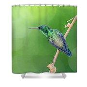 Hummingbird Abyss Shower Curtain