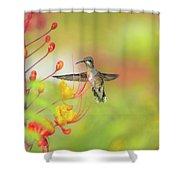 Hummingbird And Pride Of Barbados  Shower Curtain