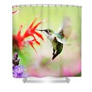 Hummingbird Fancy Shower Curtain