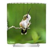 Hummingbird Flexibility Shower Curtain