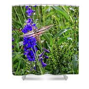 Hummingbird Moth And Larkspur Shower Curtain by Dawn Richards