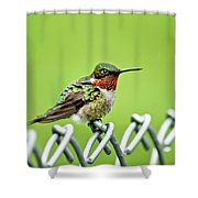 Hummingbird On A Fence Shower Curtain