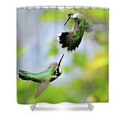 Hummingbirds Ensuing Battle Shower Curtain