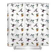 Hummingbirds Of Trinidad And Tobago On White Shower Curtain