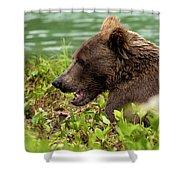 Hungry Bear Shower Curtain