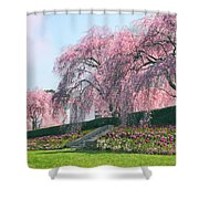 Weeping Spring Cherry  Shower Curtain