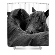 I Just Need A Hug. The Black Pony Bw Transparent Shower Curtain