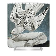 Iceland Falcon Or Jer Falcon By Audubon Shower Curtain