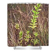 In Tall Grass Shower Curtain by Whitney Goodey