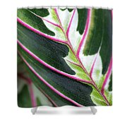 In Your Arms Shower Curtain