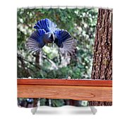 Incoming Steller's Jay Shower Curtain