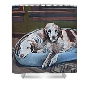Irish Red And White Setters - Archer Dogs Shower Curtain