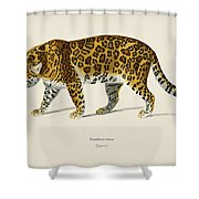 Jaguar  Panthera Onca  Illustrated By Charles Dessalines D' Orbigny  1806-1876  Shower Curtain