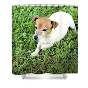 Jake Russell Shower Curtain