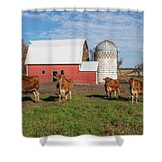 Jersey Steer Is A Curious Beast Shower Curtain